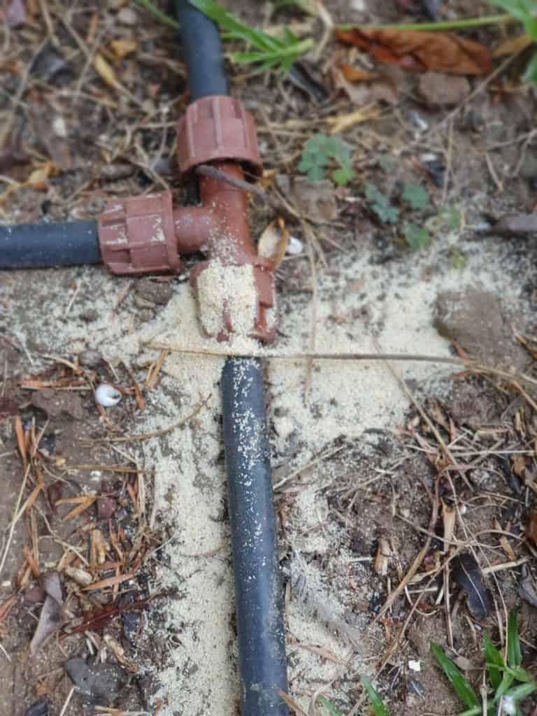 הדברת נמלי אש - פיזור גרגרים לנמלת האש