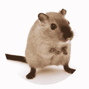 הדברה לעכברים לוכד עכברים