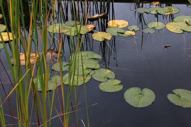 מים עומדים מושכים יתושים